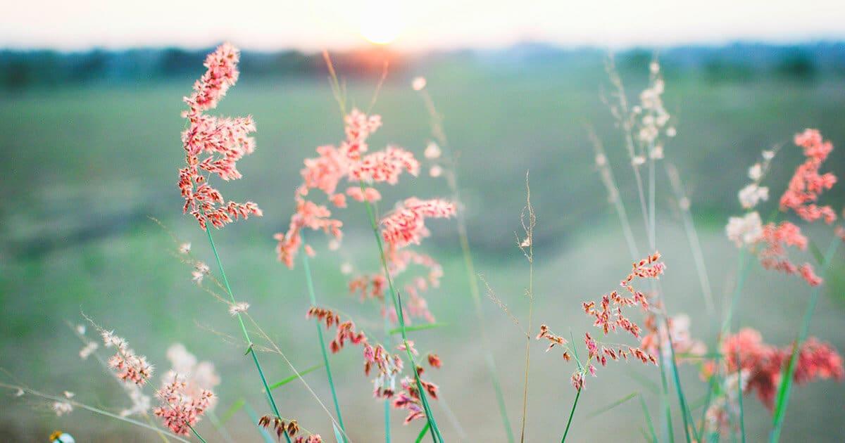 английские фразы о весне