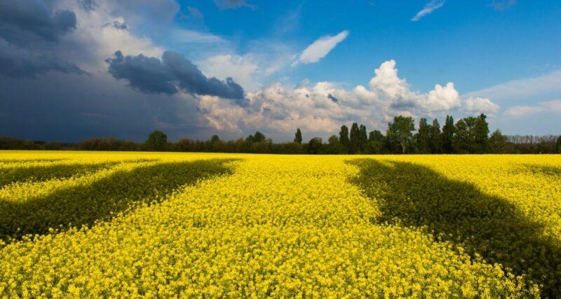 Україна – на 44 місці за знаннями англійської