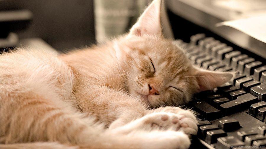 cat idioms cat nap