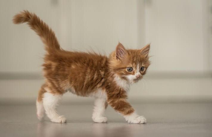 cat idioms weak as a kitten